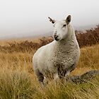 Hello Ewe by TheWalkerTouch