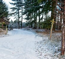 Snow Covered Forest Road by Ann Garrett
