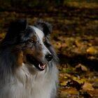Autumn  Woods by jodi payne