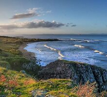 Clifftop by Steve Falla