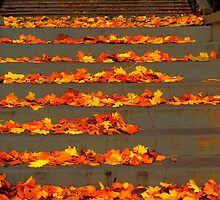 Steps to Another Season by Brian Gaynor