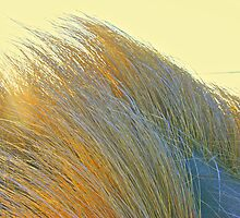 Coastal Grasses by John Butler