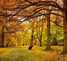 Autumn marathon by LudaNayvelt