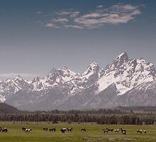 Grand Teton Horses 2 by Miles Glynn