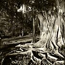Indian Rubber Tree by Jaee Pathak