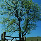 Tree and Gate by Anne Hargreaves