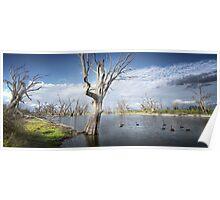 Murray River Scene Poster