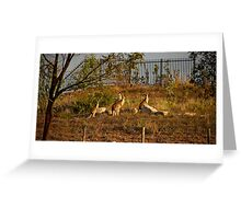 Wildlife in Suburbia Greeting Card