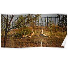 Wildlife in Suburbia Poster