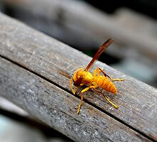 no bees, no honey ; no work , no money by Raghav