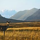 Wild Red Deer Grazing by David Alexander Elder