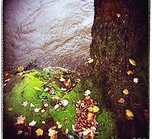 Riverside Left by Rebecca Tolk