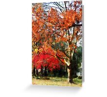 Autumn Sycamore Tree Greeting Card