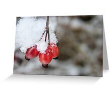 Guelder Rose Berries in the Snow Greeting Card