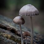 The Toadstool Family by geoff curtis