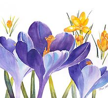 Spring Crocus by Pat Yager