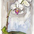 White orchid  by Karin Zeller