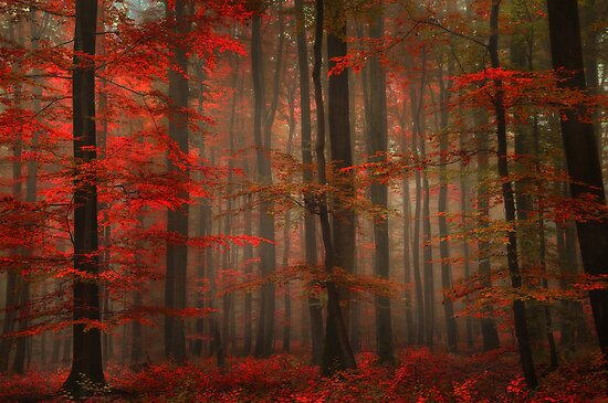 Enchanting Red by Philippe Sainte-Laudy