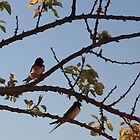 Birdsong by Christine Oakley