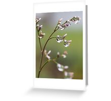 Drops in the Nature Greeting Card