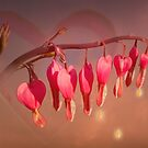 Bleeding Heart in the Morning Sun by JonnisArt