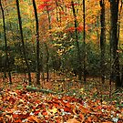 FOREST,AUTUMN. by Chuck Wickham