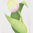 Tulip07 by Karen  Securius
