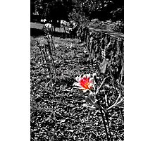 shes the colorful one Photographic Print