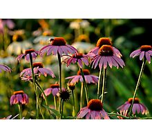 flowers be my buds Photographic Print