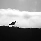 Raven by dylangould