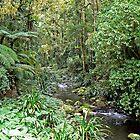 Brindle Creek by Graeme  Hyde