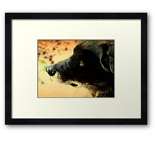 Waiting for his best friend Framed Print