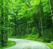 winding road in the Smokey Mountains by kellimays
