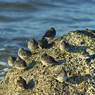 High Tide Roost by VoluntaryRanger