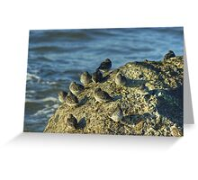 High Tide Roost Greeting Card