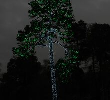 Tall Pine in Lights by bannercgtl10
