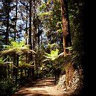 Andrew Nicholas Memorial Garden in Dandenong Ranges by Patrick Wu