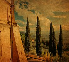 Cypress Family-Pienza, Tuscany by Deborah Downes