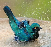 It is such fun taking a bath! by jozi1