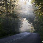 Country Road with Sun and Fog by BarbWireNRoses