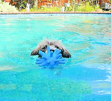 Anni swims with her blue toy by creatively