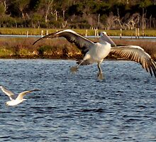 Pelican - Landing Gear Activated ;-) by Toni Kane