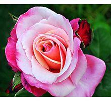 Pretty Pink Rose Photographic Print