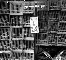 Little Cages by Janice Chiu