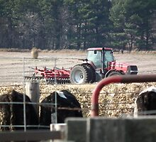 Fall Tillage by Feedlot by Deb Fedeler