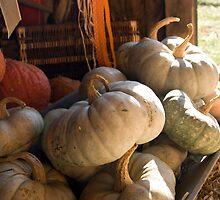 Pumpkins in the Autumn Sunlight by Circe Lucas