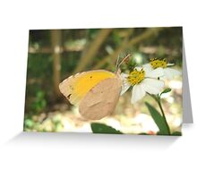 SLEEPY ORANGE ON BIDENS ALBA Greeting Card