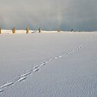 Footprints in the snow by Fiona MacNab