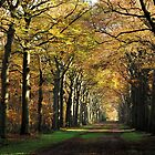 Sunshine on the November lane by jchanders