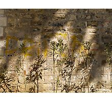 Graffiti and shadows on the wall of Alay Köskü (Parade Pavilion) Photographic Print